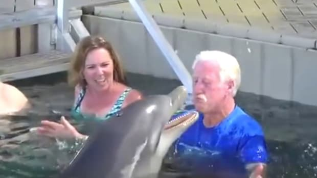 Man Plays With Dolphin