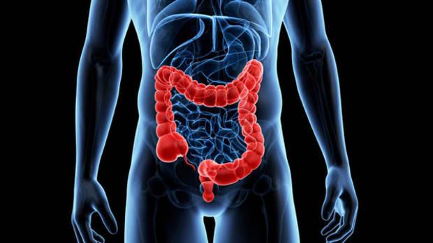 A digital image of the large intestine