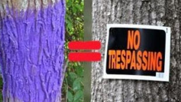 Here's What Happens If You Find A Tree Stump Painted Purple (Video) Promo Image