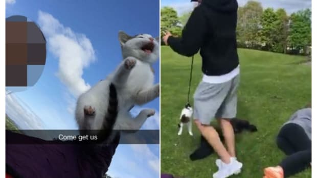 Teens Post 'Vile' Images Of Animal Abuse On Snapchat Promo Image