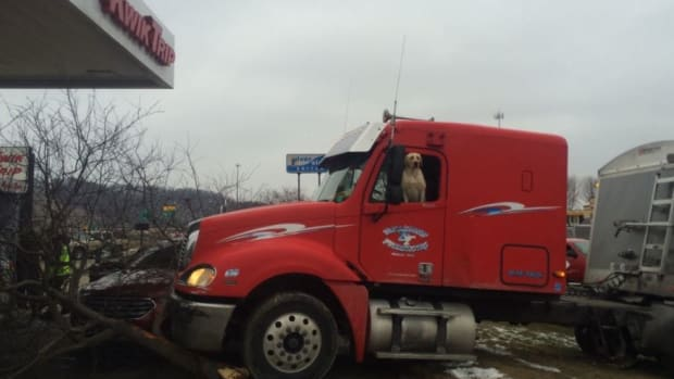 Minnesota Dog Drives Semi Truck Into Tree (Video) Promo Image