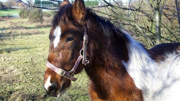 HorseSexSwitzerland.jpg