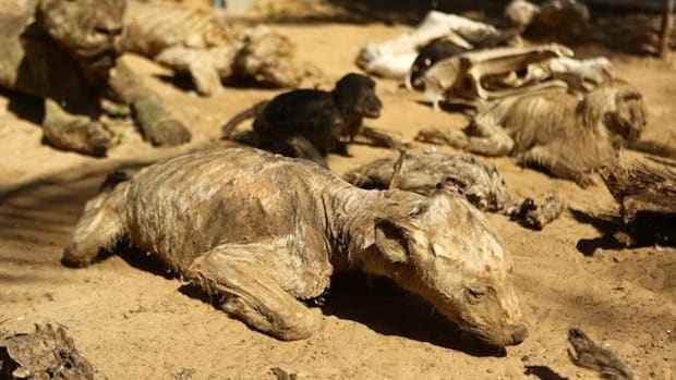 Zoo Animals Starved To Death, Left To Mummify (Photos) Promo Image