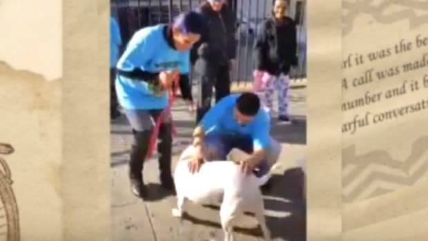 Dog Reunited With Owners, Was Stolen As Puppy (Video) Promo Image