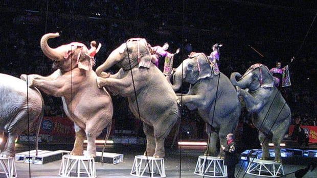 CircusElephants.jpg