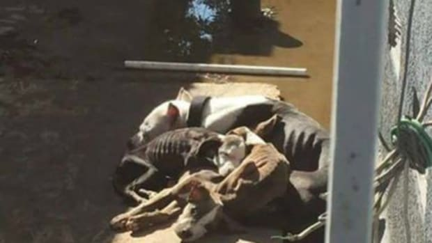 emaciated female dog and her three puppies