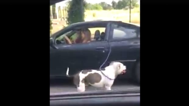 Woman Walks Dog While Driving, Outrage Follows (Video) Promo Image