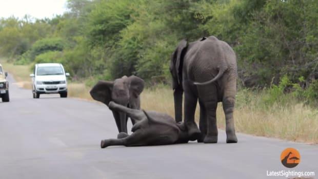 elephants1_featured.jpg