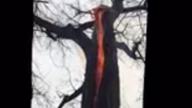Ohio Tree On Fire.