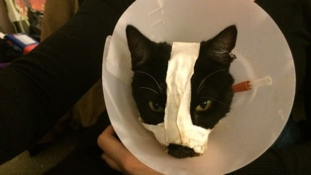 Cat Miraculously Returns Home After Torture  Promo Image