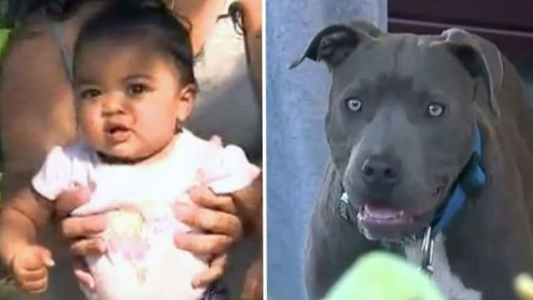 Mother Shocked To See What Pit Bull Did