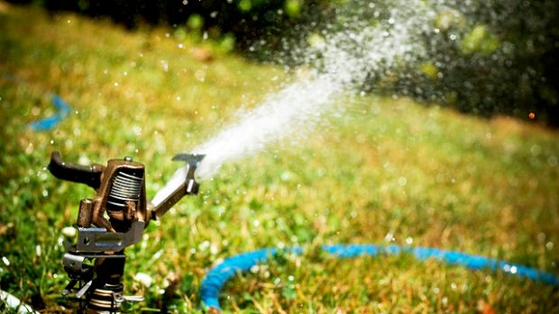 Sprinkler and lawn