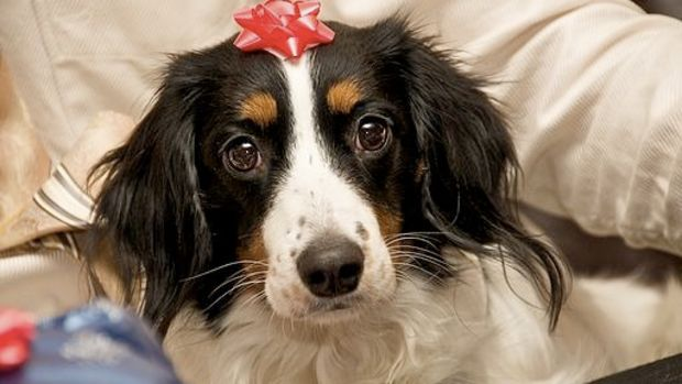 Grandma Gifted With A Puppy For Christmas (Video) Promo Image