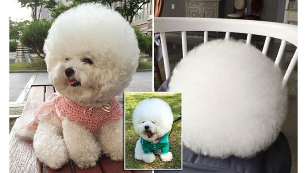 Is This The Cutest Dog Ever? (Photos) Promo Image