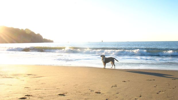 A Dog's Life Is Transformed By A Trip To The Beach (Photos) Promo Image