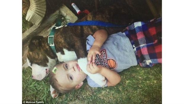 Cop Shoots Dog At Child's Birthday Party Promo Image