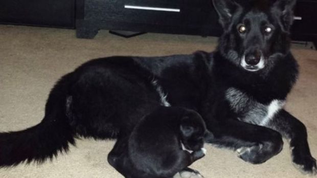 Animal Control Takes Family Dog, Claims It Is A Wolf Promo Image