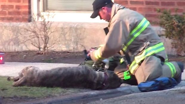 Firefighters Rescue A Dog From Burning Building (Video) Promo Image