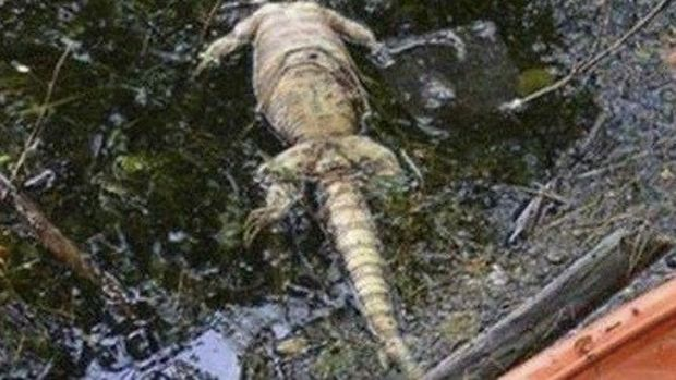 Woman Thinks She Found Alligator, Quickly Realizes What She's Actually Looking At Promo Image