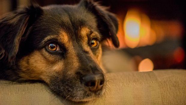 Man Caught Roasting Dog Over Fire (Photos) Promo Image