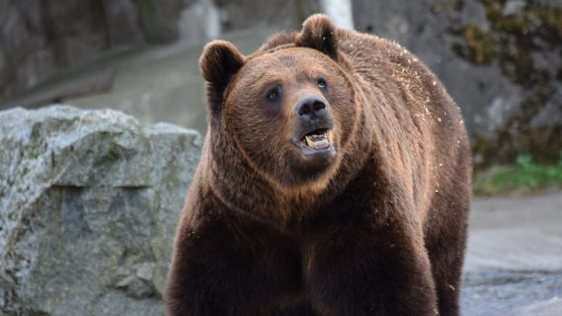 Bear Kills Child In Russia (Photos) Promo Image