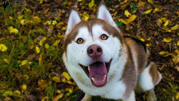 Dog Dies After Visit To PetSmart Promo Image