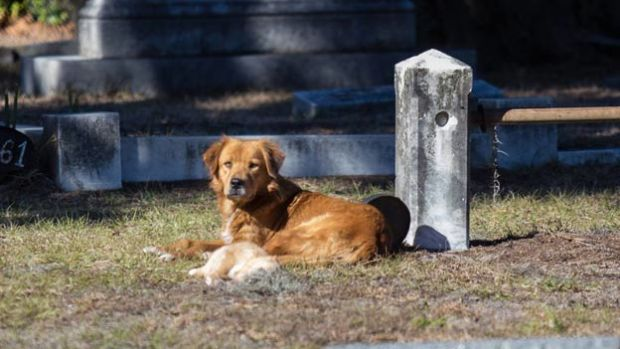 The dog in Laurel Grove Cemetery North.