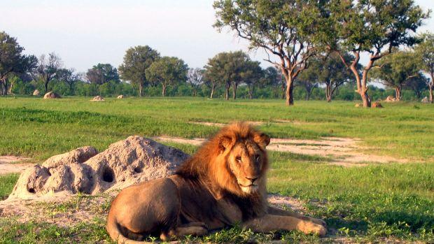 LionhwangeWiki.jpg