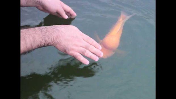 fishplaysfetch1.jpg