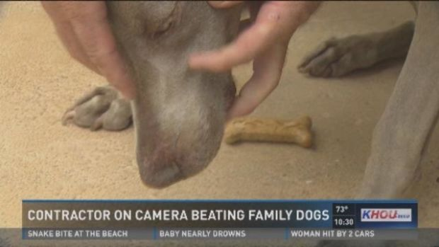 Contractor Beats Dogs With Wrench (Video) Promo Image