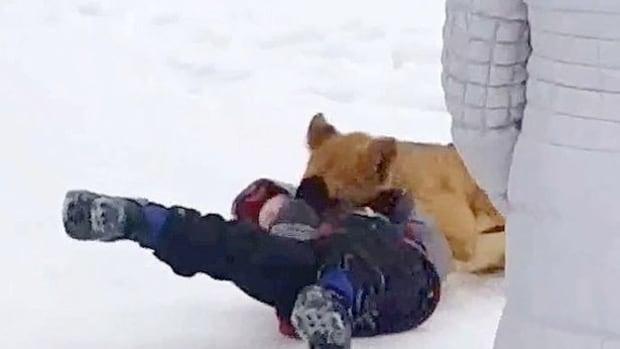 Lion Cub Attacks Toddler (Video) Promo Image