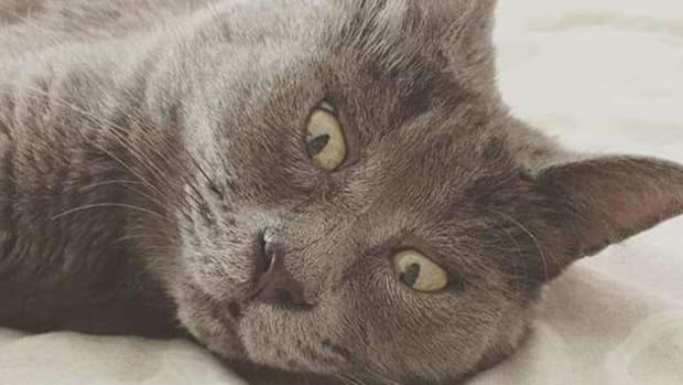 Meet The Internet's Newest Cat Sensation (Photos) Promo Image
