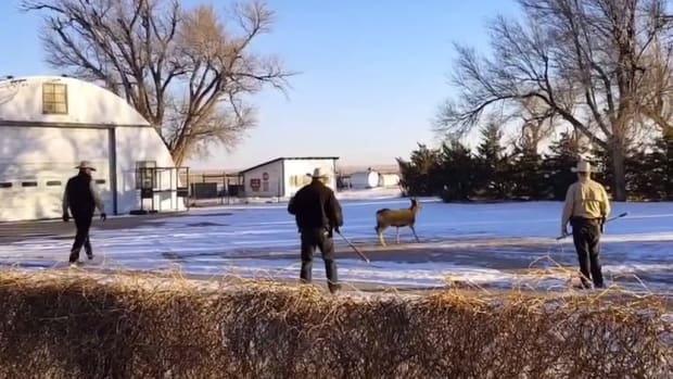 Game Wardens Shoot Pet Deer In Front Of Family (Video) Promo Image