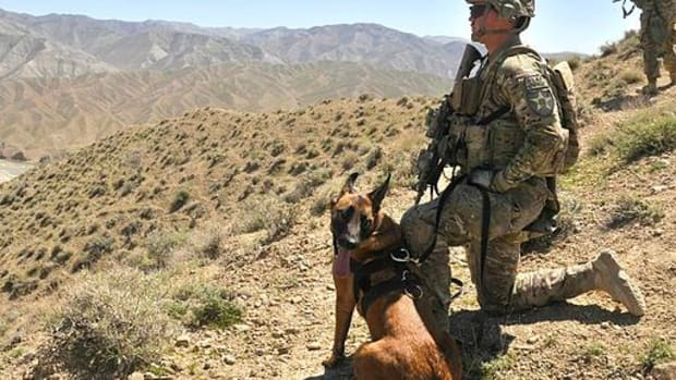 Soldier Adopts Dog Who Saved His Life (Video) Promo Image