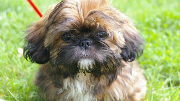 Man Allegedly Bites Out Family Dog's Eye Promo Image