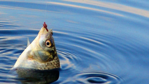Fisherman Makes Shocking Discovery Inside Fish (Video) Promo Image