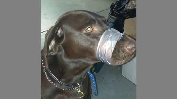 Dog With Duct Taped Muzzle.
