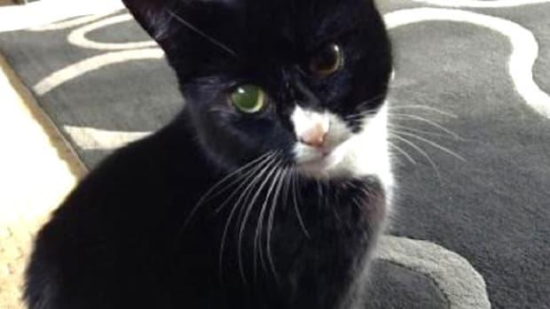 Lucky Cat Survives 30 Shotgun Wounds Promo Image