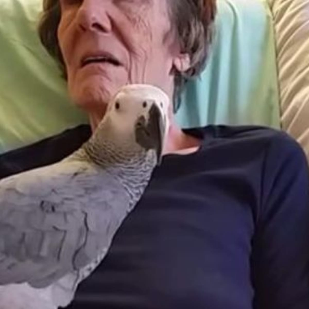 Dying Woman Says Goodbye To Her Pet Parrot, But It's The Bird's Response  That Gave Me Chills - Opposing Views