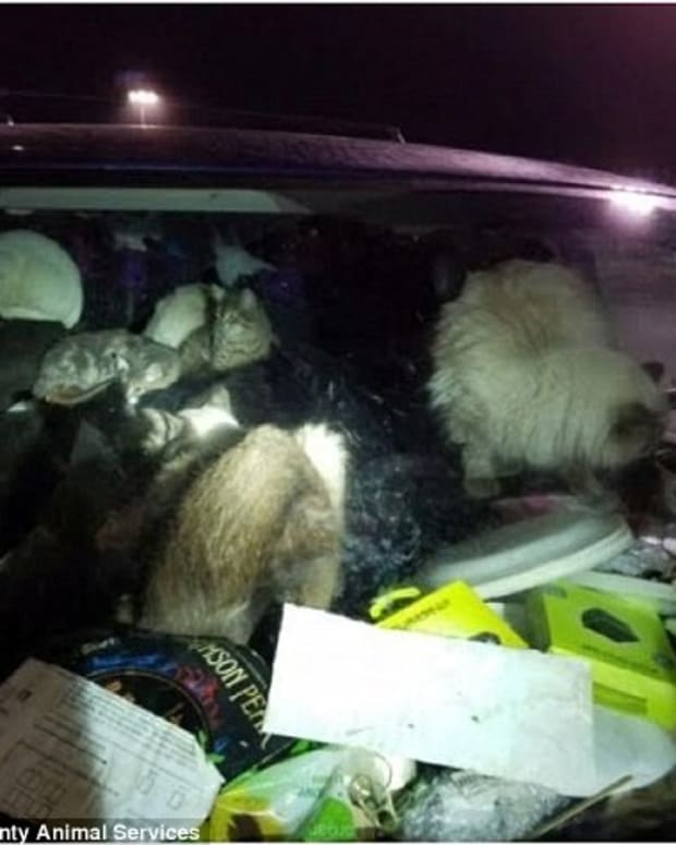 Two Women Arrested After Police Find 38 Cats In Minivan Promo Image