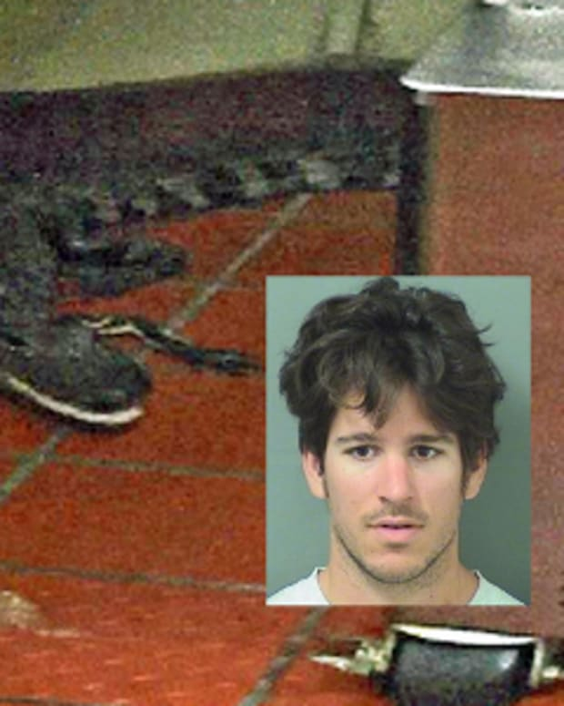 alligator that was thrown into Wendy's (inset: Joshua James)