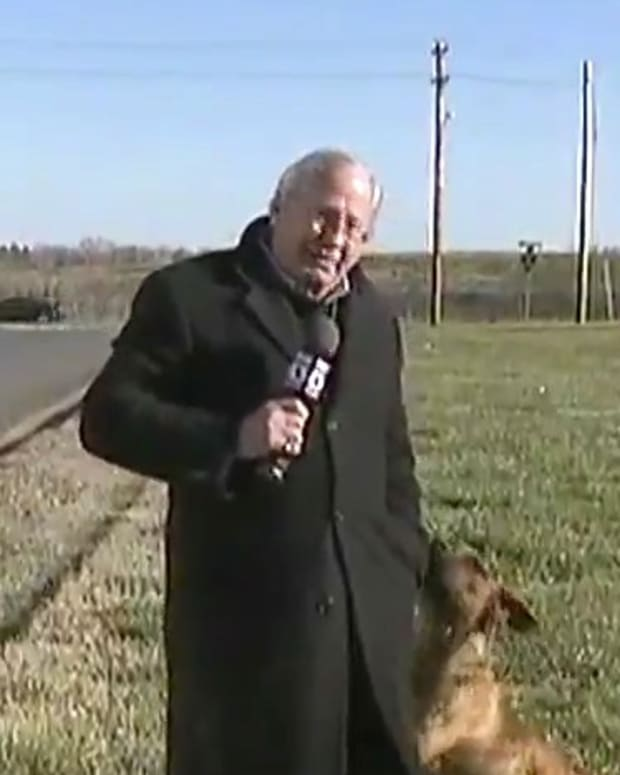 Dog Humps TV Reporter's Leg During Live Report (Video) Promo Image