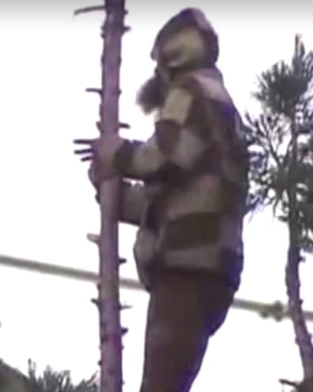 'Man In Tree' Finally Comes Down In Seattle (Video) Promo Image