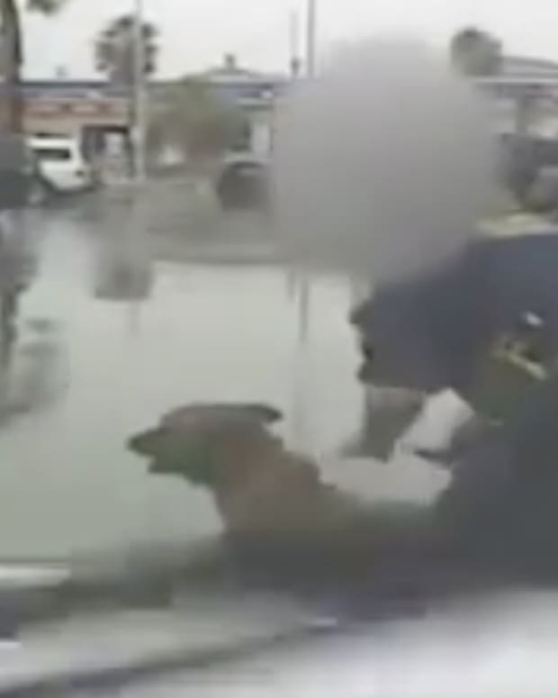Henderson Police Dog.