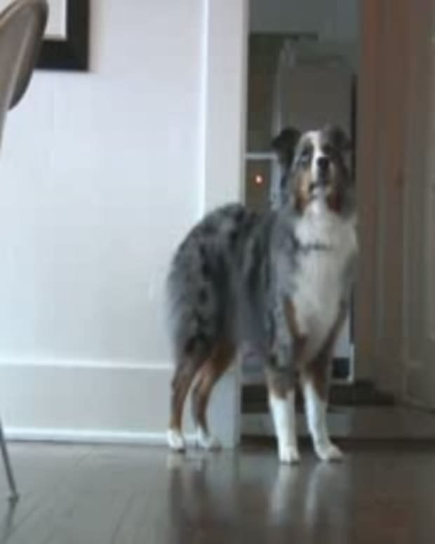 Dog Protects Owner During Early Morning Home Invasion Promo Image
