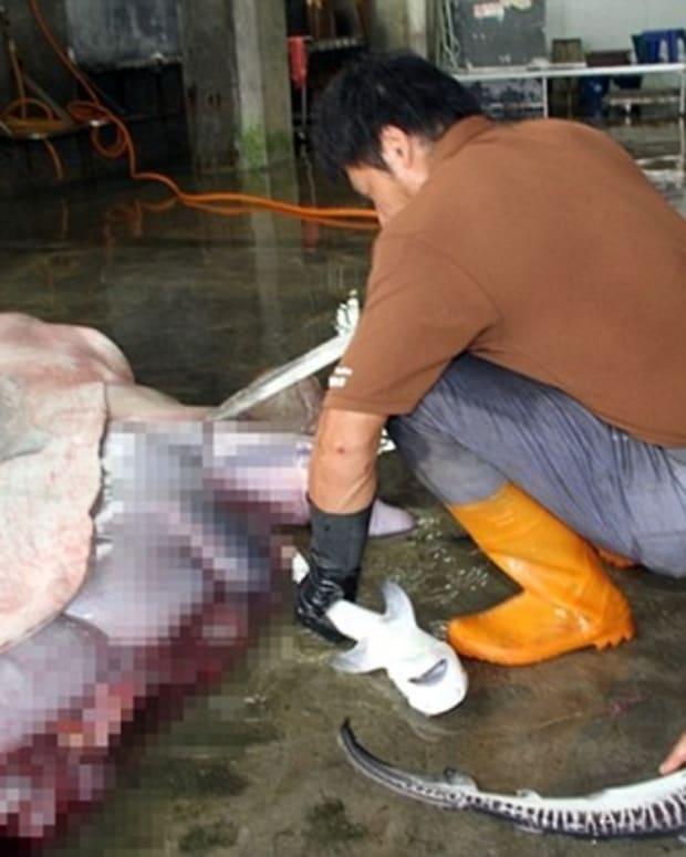 Fishermen Make Startling Discovery Inside Dead Shark Promo Image