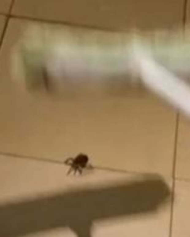 Man Kills Spider, Gets Horrifying Surprise (Video) Promo Image