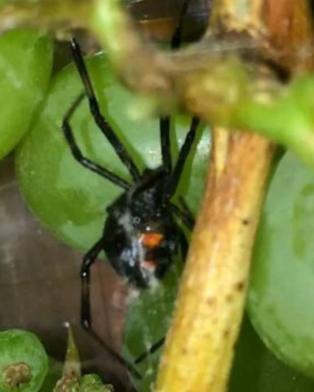 thatisalargespider_featured.jpg