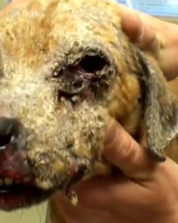 Puppy In Recovery: Chemical Burns On Face (Video) Promo Image