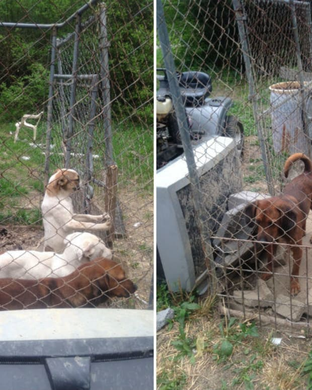 51 Abandoned Animals Discovered In Mobile Home (Photos) Promo Image